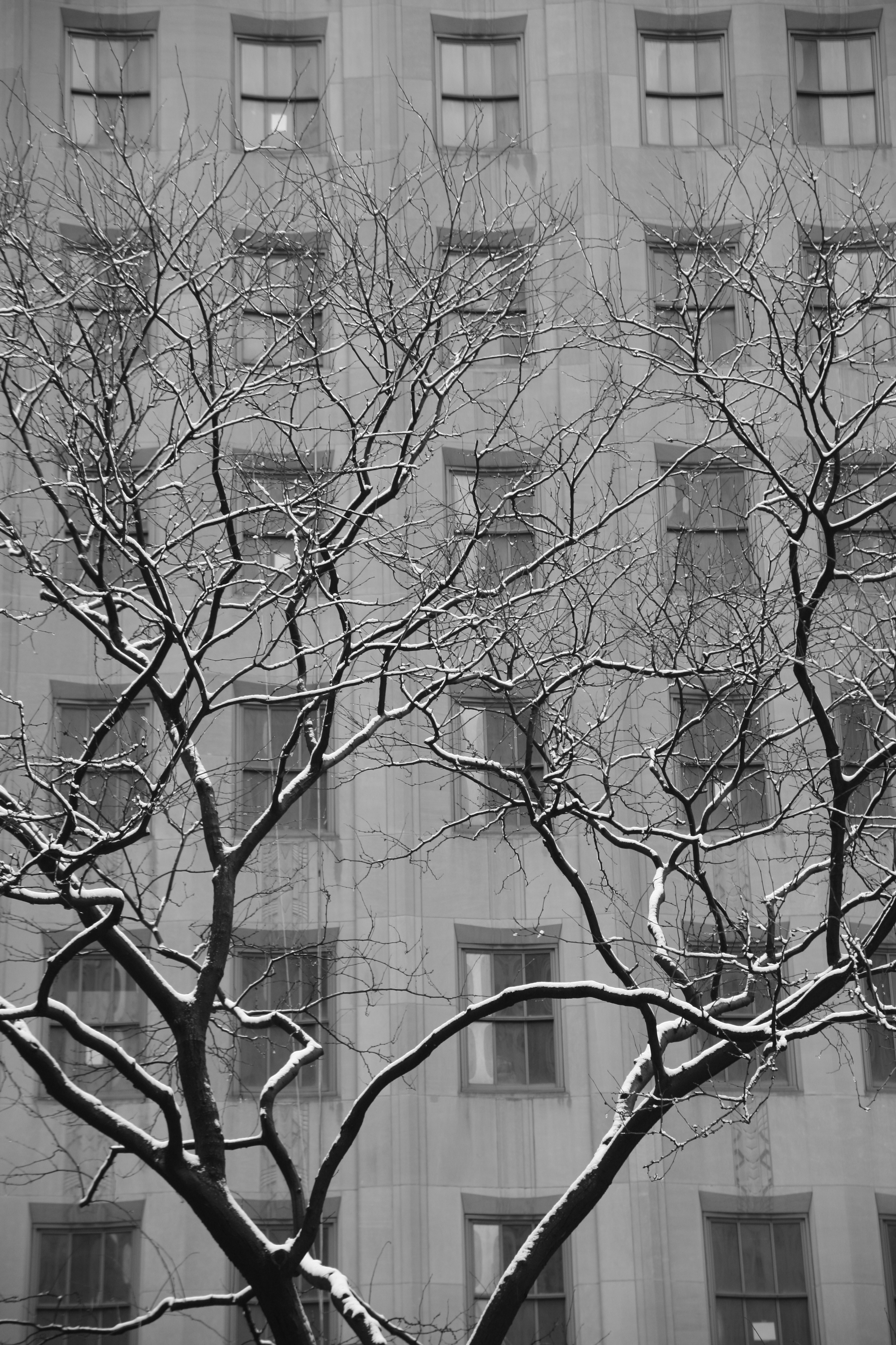 A black and white photo of a tree covered in snow in New York City
