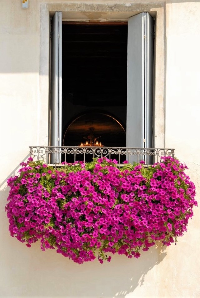 a window balcony with vibrant pink flowers hanging from it