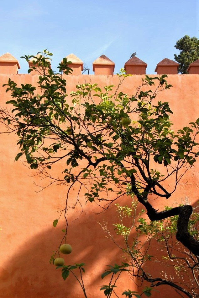 a peach coloured stone wall illuminated in warm sunlight with a gnarled tree in front of it
