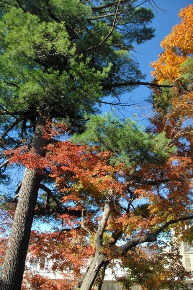 trees with golden and orange Autumn foliage