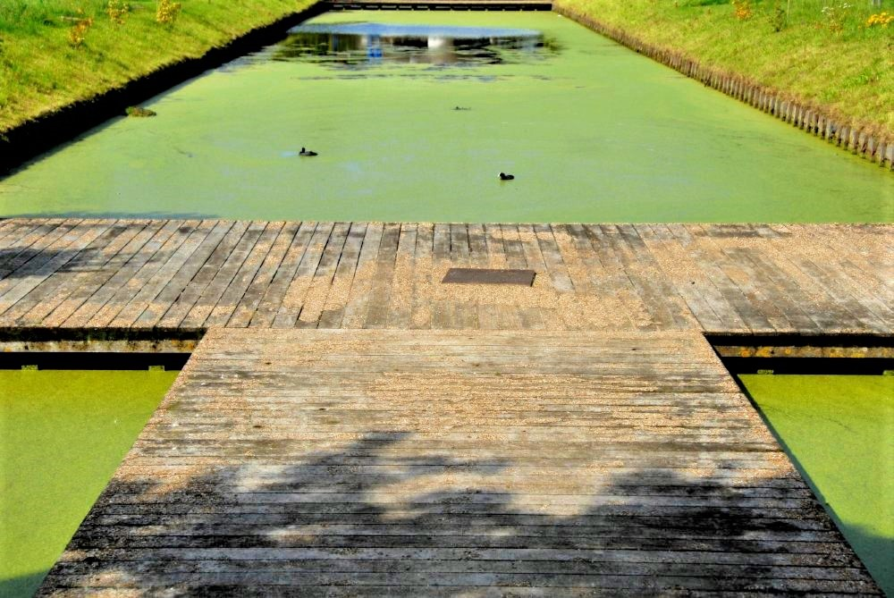 A pond covered with bright green algae and crossed with a wooden boardwalk