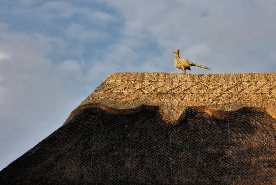 A straw sculpture in the shape of a bird perches atop a thatched roof
