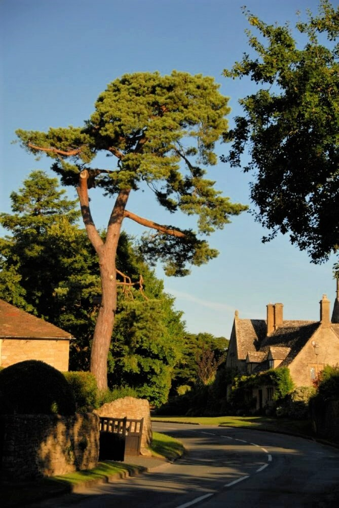 an enormous tree towers over a narrow, winding road lined with cottages