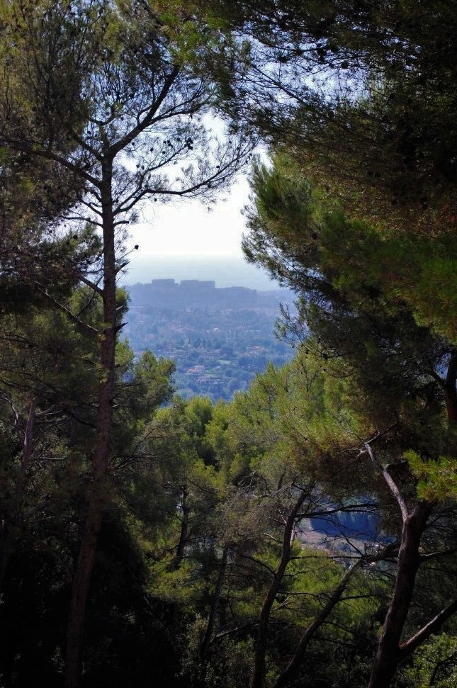 a view of the Saint-Paul de Vence monastery in the distance through a copse of trees