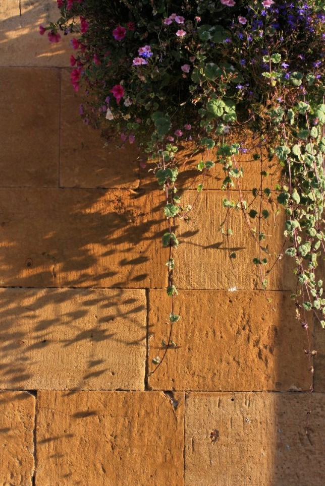 strands of flowers hang over a tan stone wall