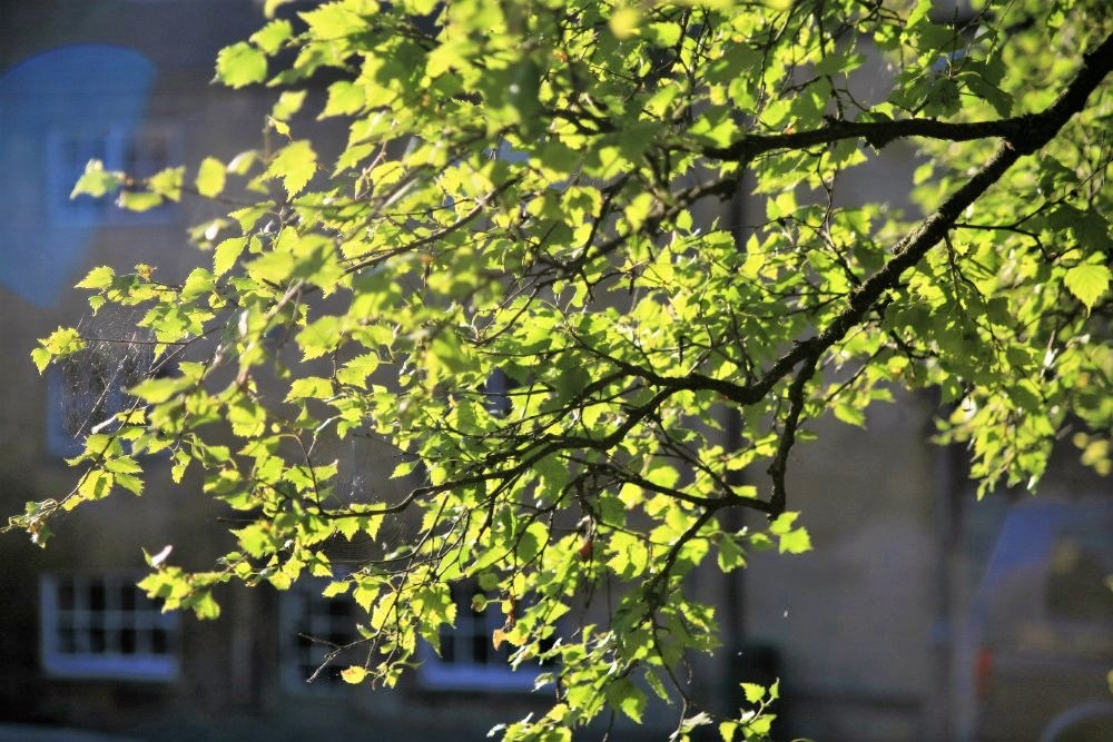 A close-up photo of a tree branch covered in vibrant green leaves, with sunlight illuminating them