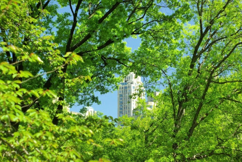 A distant skyscraper visible among vibrant green trees in the foreground