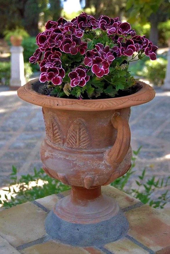 A potted plant with vibrant fuchsia flowers